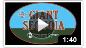 The Story of the Giant Sequoia