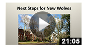 Next Steps for New Wolves